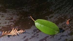 ◆◇◆雨上がりの葉っぱ
