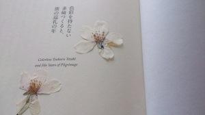 ◆◇◆村上春樹・新刊